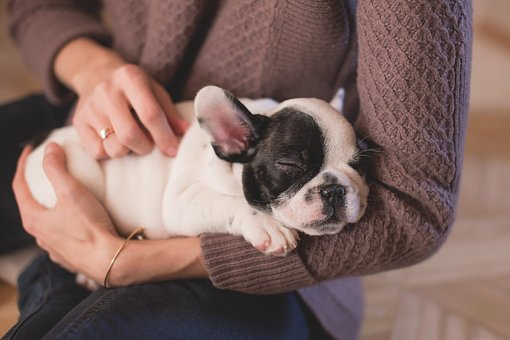 How to lessen the cost of owning a dog or puppy